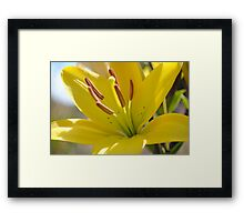 Macro-Flower Framed Print