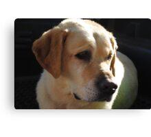 Bouncer The Labrador Puppy  Canvas Print