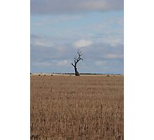 The Tree Of Life, The One Of Wisdom, Stand Out From The Rest  Photographic Print