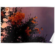 Twilight Flowers Poster