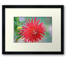 The Perfect Capture Of A Flower  Framed Print