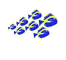 Blue Tang Ocean Fish Photographic Print