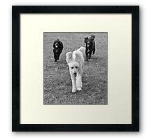 Poodle Days Framed Print