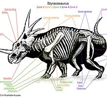 Styracosaurus Skeleton Study by Thedragonofdoom