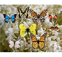 Patch of Butterflies Photographic Print