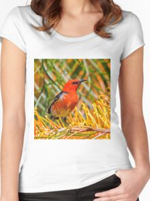 Scarlet Honeyeater Women's Fitted Scoop T-Shirt
