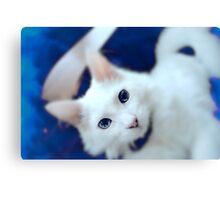 Blue smokey cat Canvas Print