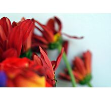 Natural composition with red petals. Photographic Print
