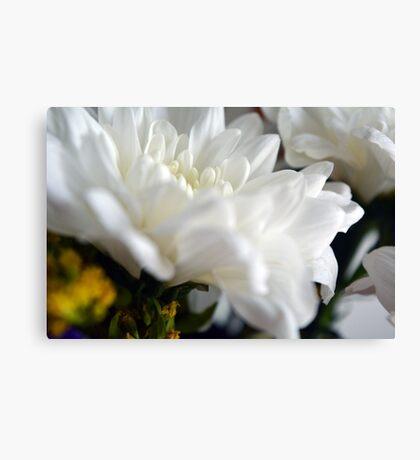 White flower macro. Canvas Print