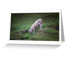Sheep in the Otway Rangers Greeting Card