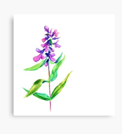 Lilac flower. Watercolor floral illustration. Canvas Print