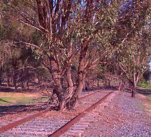 Tree on the track by ndarby1