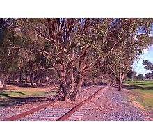 Tree on the track Photographic Print