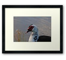 Wirldlife bird  Framed Print