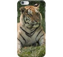 Tiger lazing but very alert iPhone Case/Skin