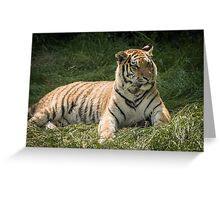 Tiger lazing but very alert Greeting Card