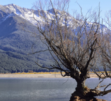 Willow Trees of Glenorchy, NZ Sticker