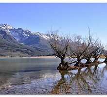 Willow Trees of Glenorchy, NZ by TedmBinegas