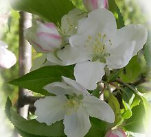 Apple Blossom Time by Martha Medford