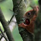 squirrel joy by Birgit Van den Broeck