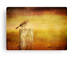 Little Birdie Canvas Print