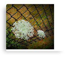 Through the Fence  Canvas Print