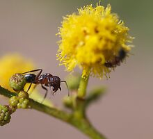 Size of an Ant by HaleyRenee