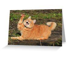 Ginger cat playing Greeting Card