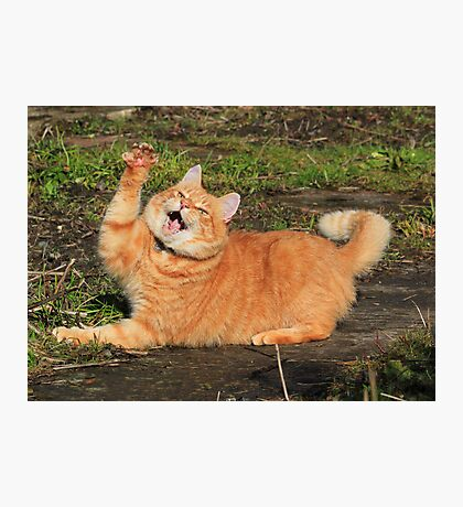 Ginger cat playing Photographic Print