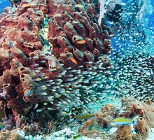 Can't See the Reef for the Fish by Mark Rosenstein