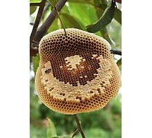 Bees on honeycomb Photographic Print