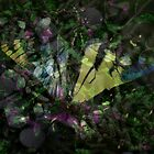 Butterfly Design 2 by Brent Fennell