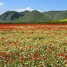 A sea of flowers by annalisa bianchetti