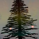 Evergreen by Aimee Cozza