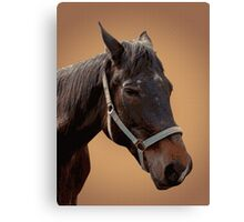 The head of a horse, two horses Canvas Print