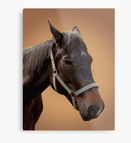 The head of a horse, two horses Metal Print