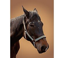 The head of a horse, two horses Photographic Print
