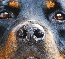 The Rottweiler Sticker