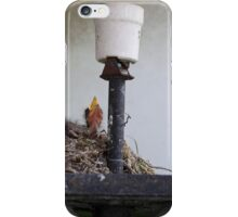 Bird nest in an old street lamp. iPhone Case/Skin