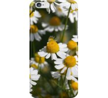 Chamomile flowers iPhone Case/Skin