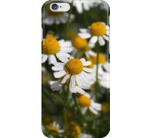 Chamomile flowers (Matricaria chamomilla) iPhone Case/Skin