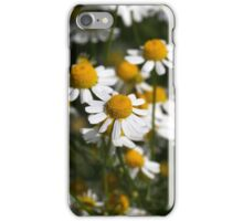 Chamomile flowers (Matricaria chamomilla) iPhone Case/Skin