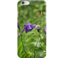 Flowers of European columbine herb (Aquilegia vulgaris). iPhone Case/Skin
