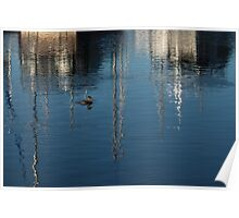 Young Red-Necked Grebe on Silver Poster