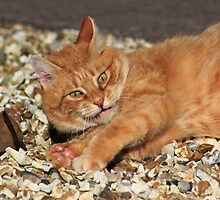 Ginger cat playing with toy mouse by turniptowers