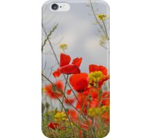 Flowers of common poppy (Papaver rhoeas) in a field. iPhone Case/Skin