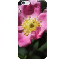 Flower of the wild rose Rosa jundzillii iPhone Case/Skin