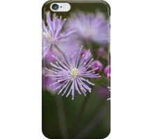 Macro photo of  columbine meadow-rue flowers (Thalictrum aquilegiifolium). iPhone Case/Skin