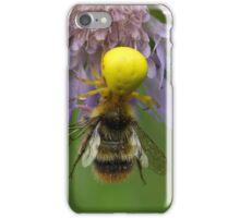 Crab spider (Misumena vatia) with a bumblebee iPhone Case/Skin