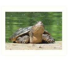 Giant Snapping Turtle Art Print